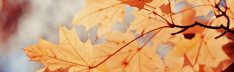 Herbstlich goldene Blätter